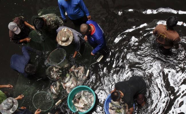 Рыбалка внутри универмага