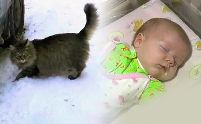 Кошка спасла младенца