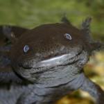 Необычные морские существа